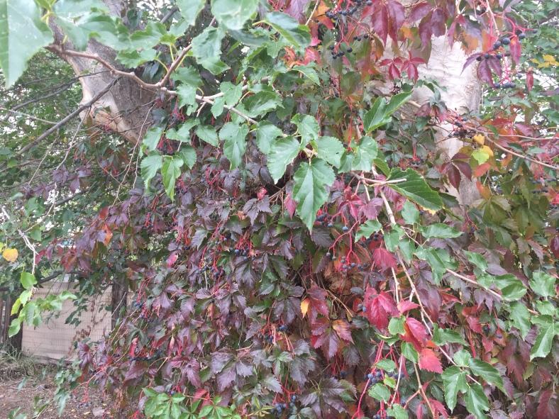 redgreenleaves